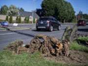 Drivers pass the uprooted trunk of a tree along Northeast 162nd Avenue as blustery conditions continued on Tuesday morning.