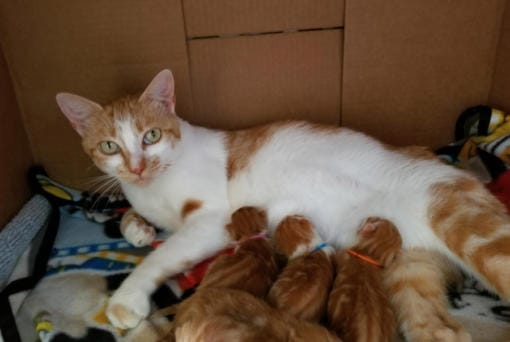 Second Chance Companions pet rescue organization has at least 75 kittens in foster care right now.