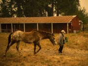 Deborah Mann of Milwaukie, Ore., walks with her horse Pete at the Clark County Event Center at the Fairgrounds on Friday. Mann boards her horse at Coyote Moon Ranch in Oregon City, Ore. The ranch welcomed many horses from the surrounding areas when the fires started, but then had to be evacuated too.