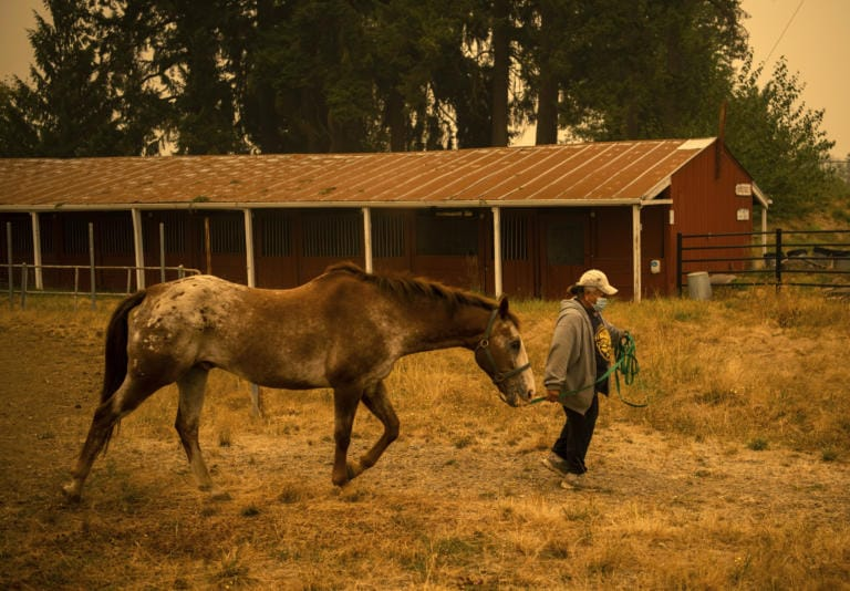 Deborah Mann of Milwaukie, Ore., walks with her horse Pete at the Clark County Fairgrounds on Sept. 11, 2020. Mann boards her horse at Coyote Moon Ranch in Oregon City. The ranch welcomed in many horses from the surrounding areas early this week when families began evacuating, but just two days later they had to evacuate themselves and were able to bring many of the horses up to the Clark County Fairgrounds. Around 160 horses from surrounding areas are now boarded at the fairgrounds and many of the owners are staying on the grounds as well in their RV's and trailers. (Alisha Jucevic/The Columbian)