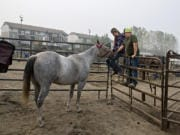 Cheyenne Joachim of Hockinson joins her brother, Dakoda, as they spend a quiet moment with Barbie, a horse evacuated from the wildfires, at the Clark County Saddle Club on Thursday morning. The club hopes to raise money for its new location on Thursday during Give More 24!, an annual day of giving in Southwest Washington.