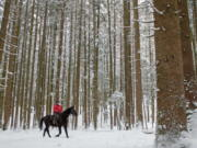 "FILE -- In this Monday, Feb. 2, 2015 a woman rides with her horse through a forest near Lofer, Austrian province of Salzburg. The Austrian government has spoken up to correct U.S. President Donald Trump's claim that people in their country live in ""forest cities."" Trump has recently cited Austria and other European countries as models of good forest management that U.S. states like California, which has seen devastating wildfires lately, should learn from."