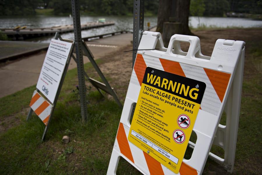 Blue-green algae blooms have plagued Lacamas Lake this summer.