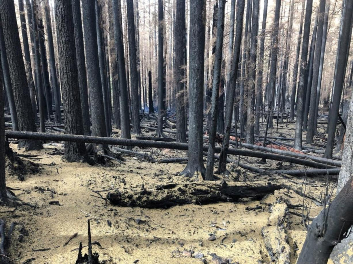 The aftermath of the Big Hollow Fire, still smoldering but no longer growing in size in Gifford Pinchot National Forest. (U.S.
