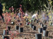 The Watershed Alliance of Southwest Washington is hosting a tree-planting event on Saturday for Make a Difference Day with separately marked planting areas for each individual or household.
