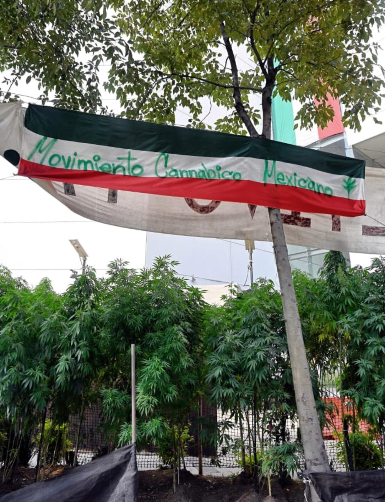 This file photo shows a view of a cannabis pantation with a flag reading Mexican Cannabic Movement outside the Senate's building in Mexico City on September 30, 2020. Mexico's marijuana revolution is on display steps from the nation's Senate, where for the last nine months activists have maintained a fragrant cannabis garden.