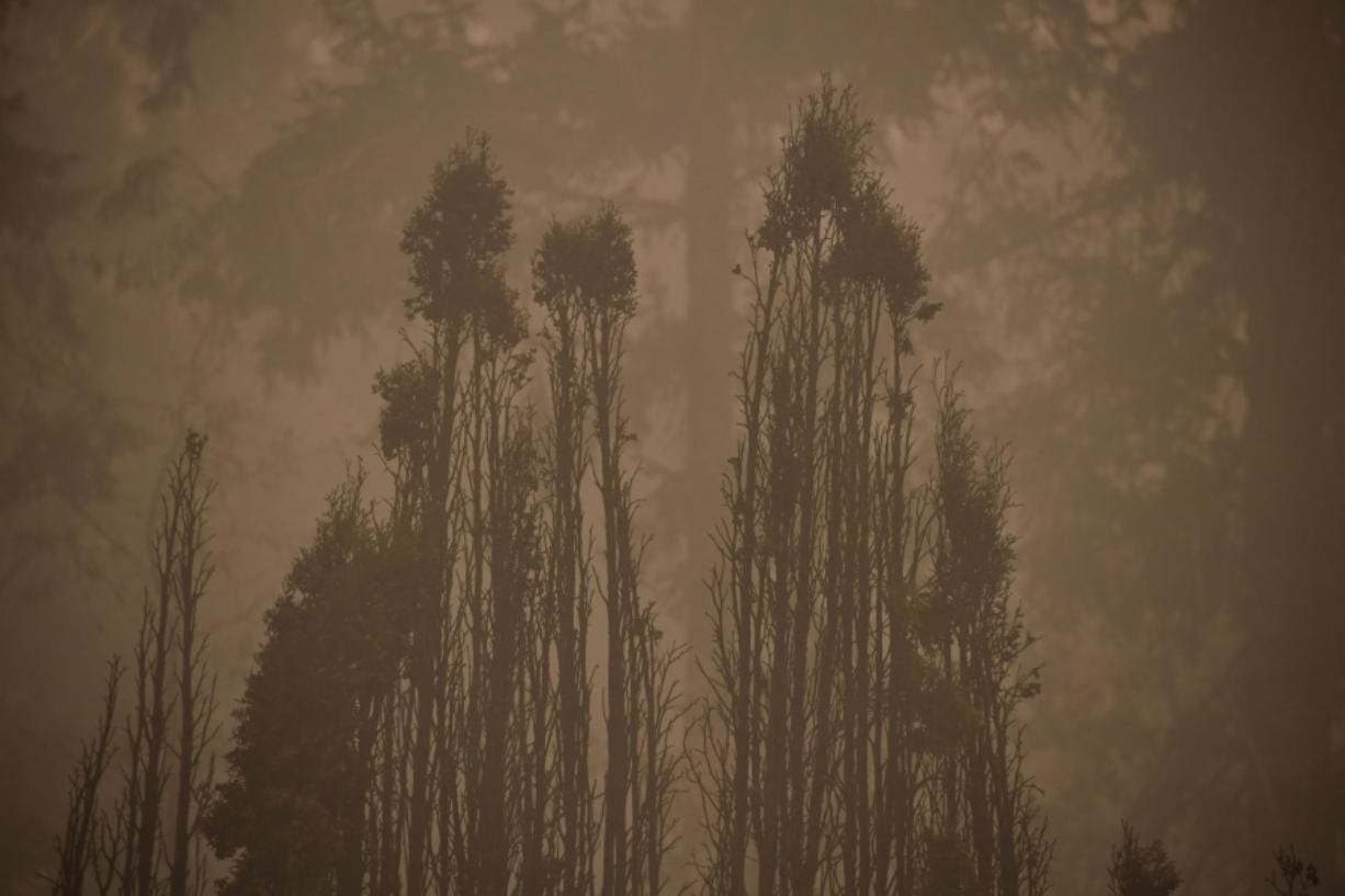 The skeletal silouhette of burnt trees are seen after a wildfire swept through an R.V. park destroying multiple homes in Estacada, Oregon on Sept. 12, 2020.