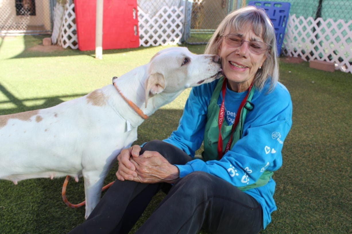 In this Sept. 21, 2019 photo, Marcia Hamilton, a volunteer at Maricopa County Animal Care and Control, plays with Celia at the shelter in Phoenix, Ariz. There are many ways to volunteer at an animal shelter to improve the lives of the animals waiting there for a forever home. (AP Photo/Michelle A. Monroe) (Michelle A.