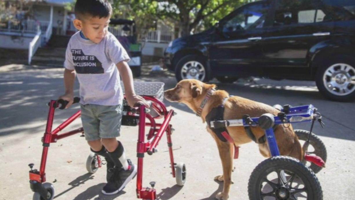 """This image released by CBS All Access shows Ace Ruelas-Jimenez, left, with dog Frances in a scene from the episode """"A Discount Service Dog"""" on the new original docuseries """"That Animal Rescue Show,"""" launching on Thursday, Oct. 29."""