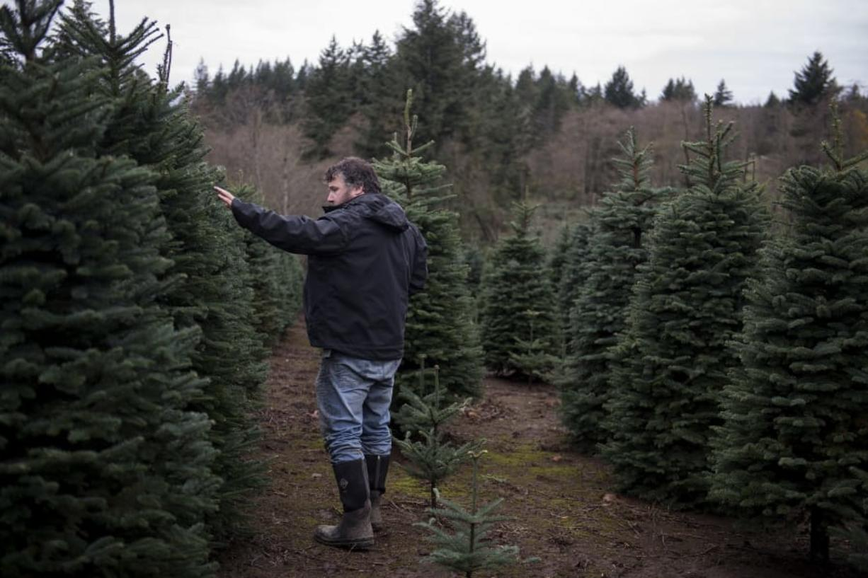 Eric Klopman of Klopman Farms walks through rows of noble firs while gearing up for Christmas tree season in Washougal. Tree farms are mostly outdoor operations, so it's relatively straightforward to add COVID-19 safety measures.