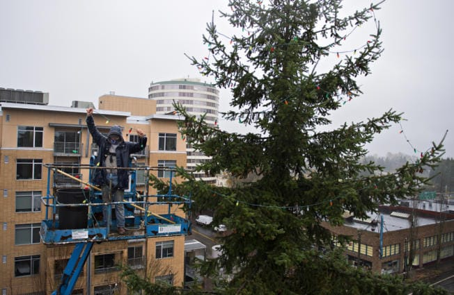 Jason Frizzell of J & J Roofing and Construction helps hang thousands of Christmas lights in the branches of a tree at the southeast corner of Esther Short Park on Monday morning. There will be no community lighting ceremony of the Vancouver Christmas tree this year because of COVID-19 concerns, but residents are welcome to drive by the tree to celebrate the season.