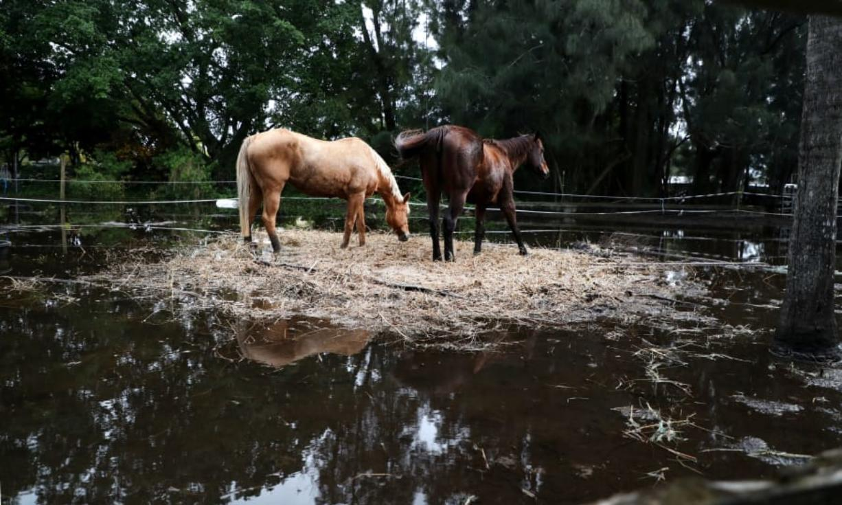 Two horses stand in the only dry spot at the Rancho Gonzalez stable in Davie. Horse barns in Davie and Southwest Ranches are under water days after Tropical Storm Eta flooded parts of South Florida.