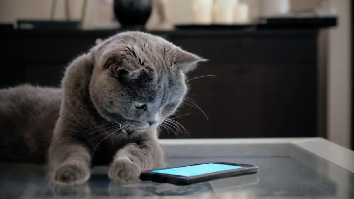The MeowTalk app was created by a Seattle company.