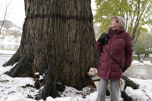 Kyla Wahlstrom led the fight to save the giant elm tree she has long admired while on walks in her Minneapolis neighborhood between Lake of the Isles and Cedar Lake.