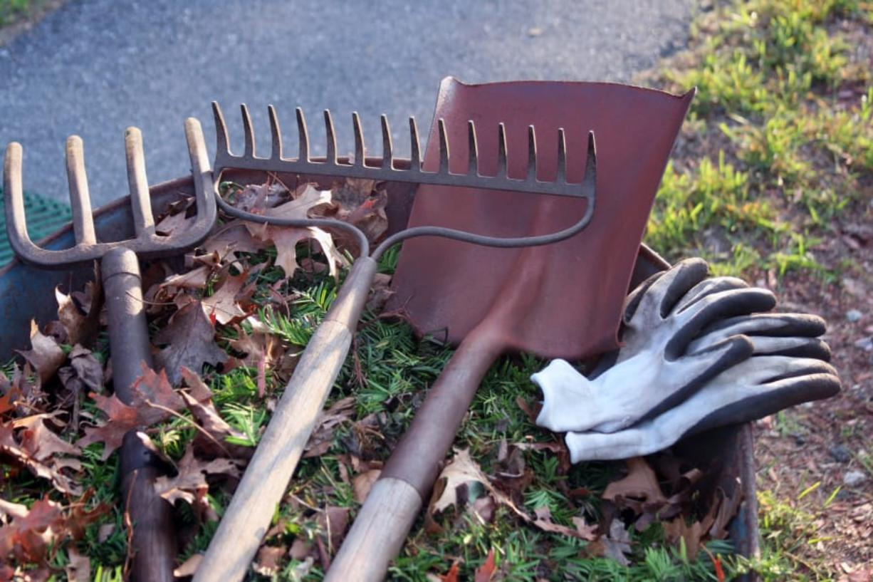Some yard chores, such as removing dead plants that could spread disease or sharping to tools, will make your life easier in the spring.