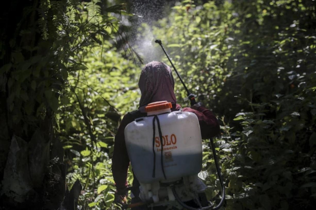 A female worker sprays herbicide in a palm oil plantation in Sumatra, Indonesia, on Saturday, Sept. 8, 2018. Many women are hired by subcontractors on a day-to-day basis without benefits, performing the same jobs for the same companies for years and even decades. They often work without pay to help their husbands meet otherwise impossible daily quotas.