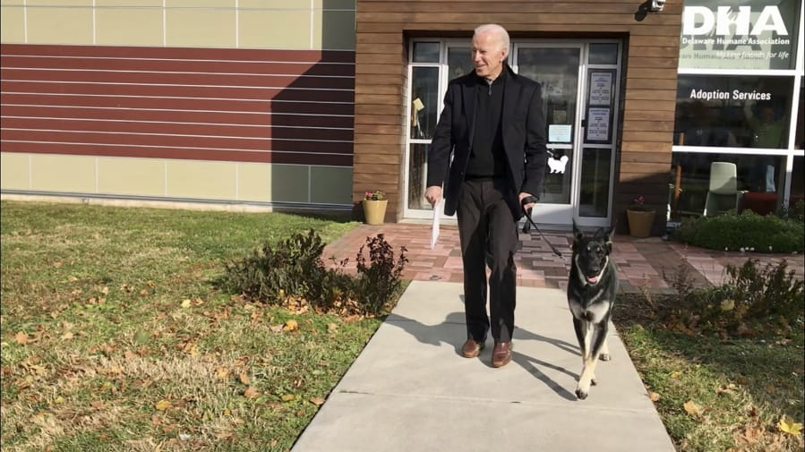 FILE - This Nov. 16, 2018, photo, file provided by the Delaware Humane Association shows Joe Biden and his newly-adopted German shepherd Major, in Wilmington, Del. President-elect Biden will likely wear a walking boot for the next several weeks as he recovers from breaking his right foot while playing with his dog Major on Saturday, Nov. 28, 2020, his doctor said.