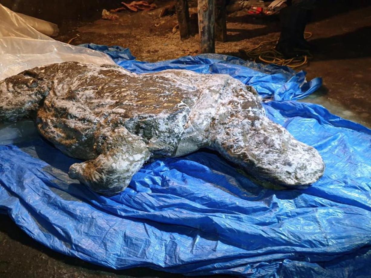 The carcass of a woolly rhino, taken in Yakutia.
