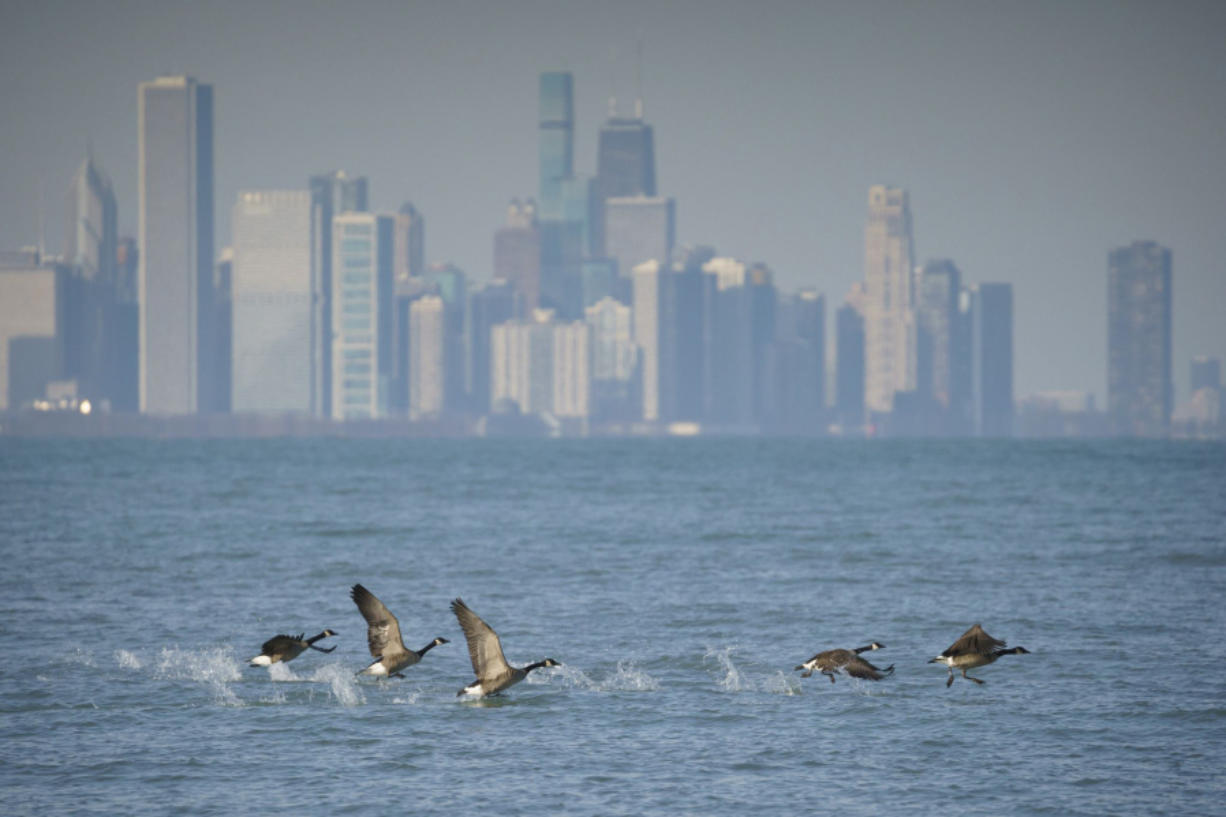 Geese fly off in front of the Chicago skyline near Rainbow Beach Park on Dec. 26.