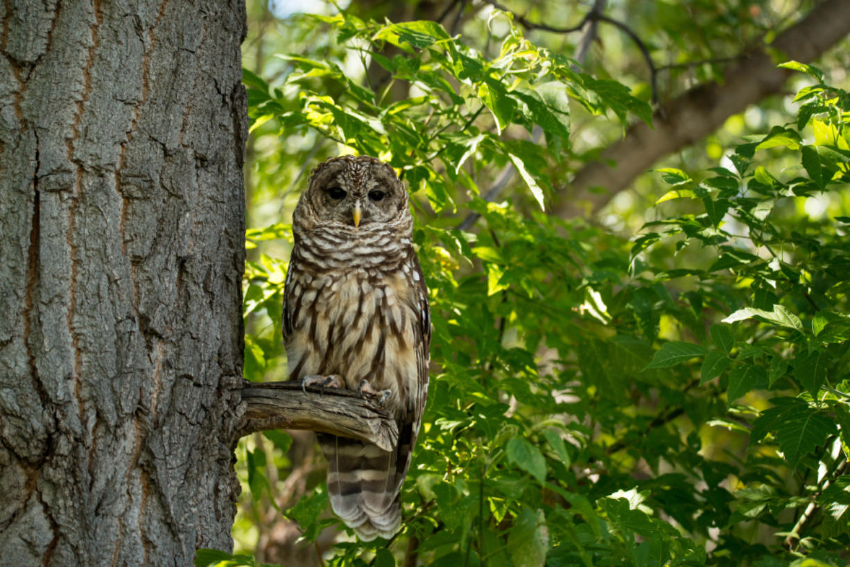 The Interior Department will eliminate nearly 3.5 million acres of Cfucritical habitatCfu established for the owls from federal protection.