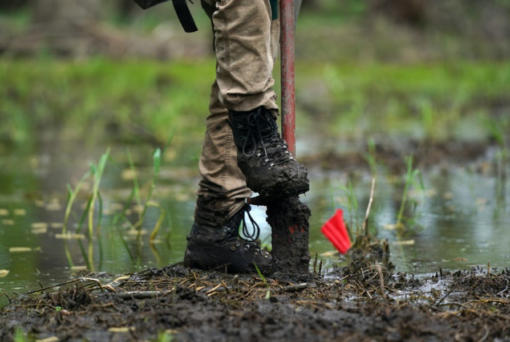 Conservation Corps crew leader Sarah Curran planted trees on the bits of raised land she could find along a Mississippi River floodplain in southeast Minnesota.
