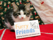 MINNEHAHA: The no-kill cat shelter Furry Friends adopted 380 cats in 2020, more than any other year in its 21-year history.