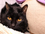 MINNEHAHA: Nonprofit no-kill cat rescue shelter Furry Friends received a grant of $6,250 from the Laspa Family Fund.
