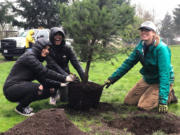 Community members participate in a tree-planting event at Ellsworth School Park in February 2020, just before the COVID-19 pandemic began. The pandemic derailed the city's plans to plant a thousand trees last year, and they leaned on private property owners to surpass the goal.