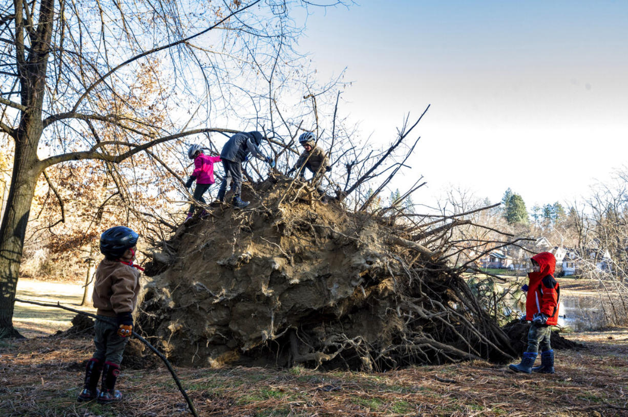 Children climb  around a large ponderosa pine that fell in Cannon Hill Park after a windstorm passed the area on Wednesday, Jan. 13, 2021 in  A powerful wind storm has rolled through the Pacific Northwest left a trail of damage.