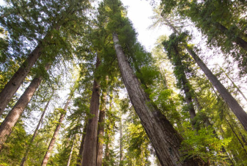 Save the Redwoods League paid $24.7 million to buy a conservation easement over the sweeping Mailliard Ranch, located in southern Mendocino County near the Sonoma County line.