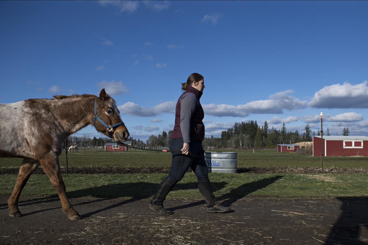 Kassandra Bullcreek, ranch manager at Silver Buckle Ranch in Brush Prairie, walks with Angel, 14, a Pony of the Americas, through the ranch, which closed to classes last week because of snow.