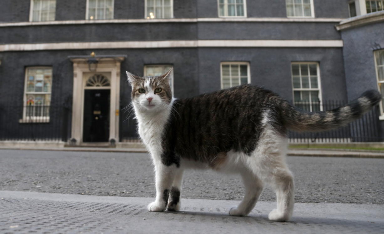 Larry, the official 10 Downing Street cat walks outside 10 Downing Street on May 21 before the nationwide Clap for Carers to recognise and support National Health Service workers and carers fighting the coronavirus pandemic, in London.
