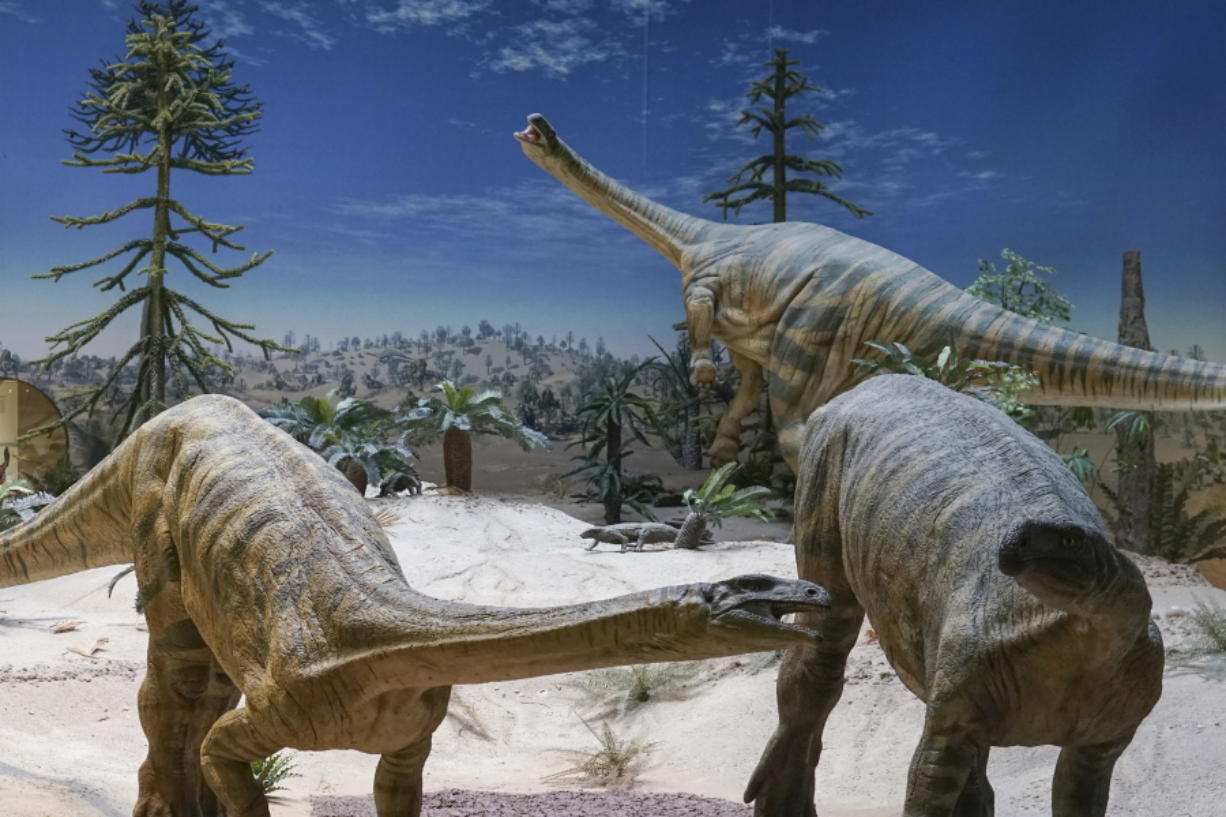 Plateosaurus models at the State Museum of Natural History in Stuttgart, Germany. Plant-eating dinosaurs such as these probably arrived in the Northern Hemisphere many millions of years later than their meat-eating cousins, according to a study published Feb. 16.