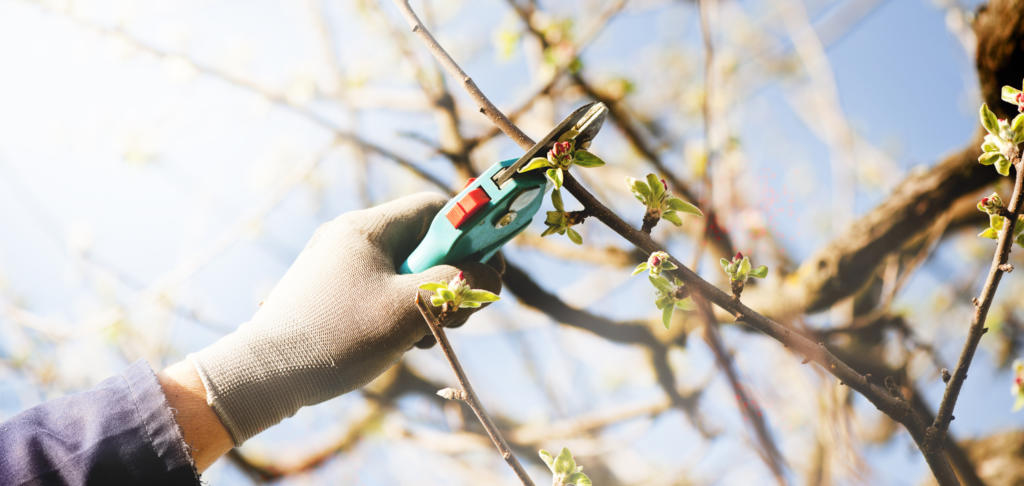 Fruit trees should be pruned every year.