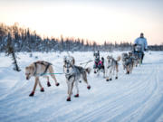 La Center High graduate Josh McNeal leads his sled dog team out on a run in preparation for The Iditarod  dog sled race, which starts Sunday just outside of Wasilla, Alaska.