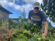 Bob Smith, one of the growers who filed suit accusing companies of counterfeiting Kona coffee, prunes a tree on the farm he owns with his wife on Hawaii's Big Island.
