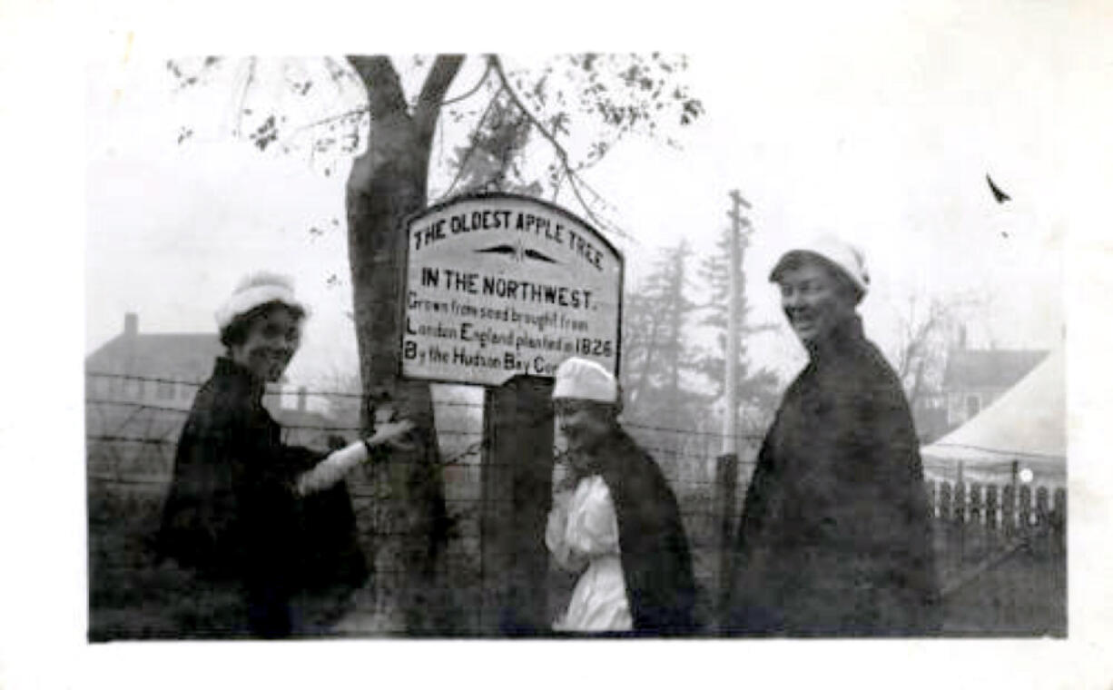 Military nurses pose for a photo in front of Vancouver's Old Apple Tree in 1918.