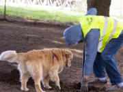 Golden retriever Lucy queries volunteer Marty Rutkovitz about whether she can help dig on Saturday at Ike Memorial Dog Park in Vancouver.