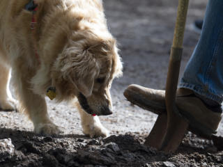 DOGPAW holds volunteer cleanup at Ike Memorial Dog Park