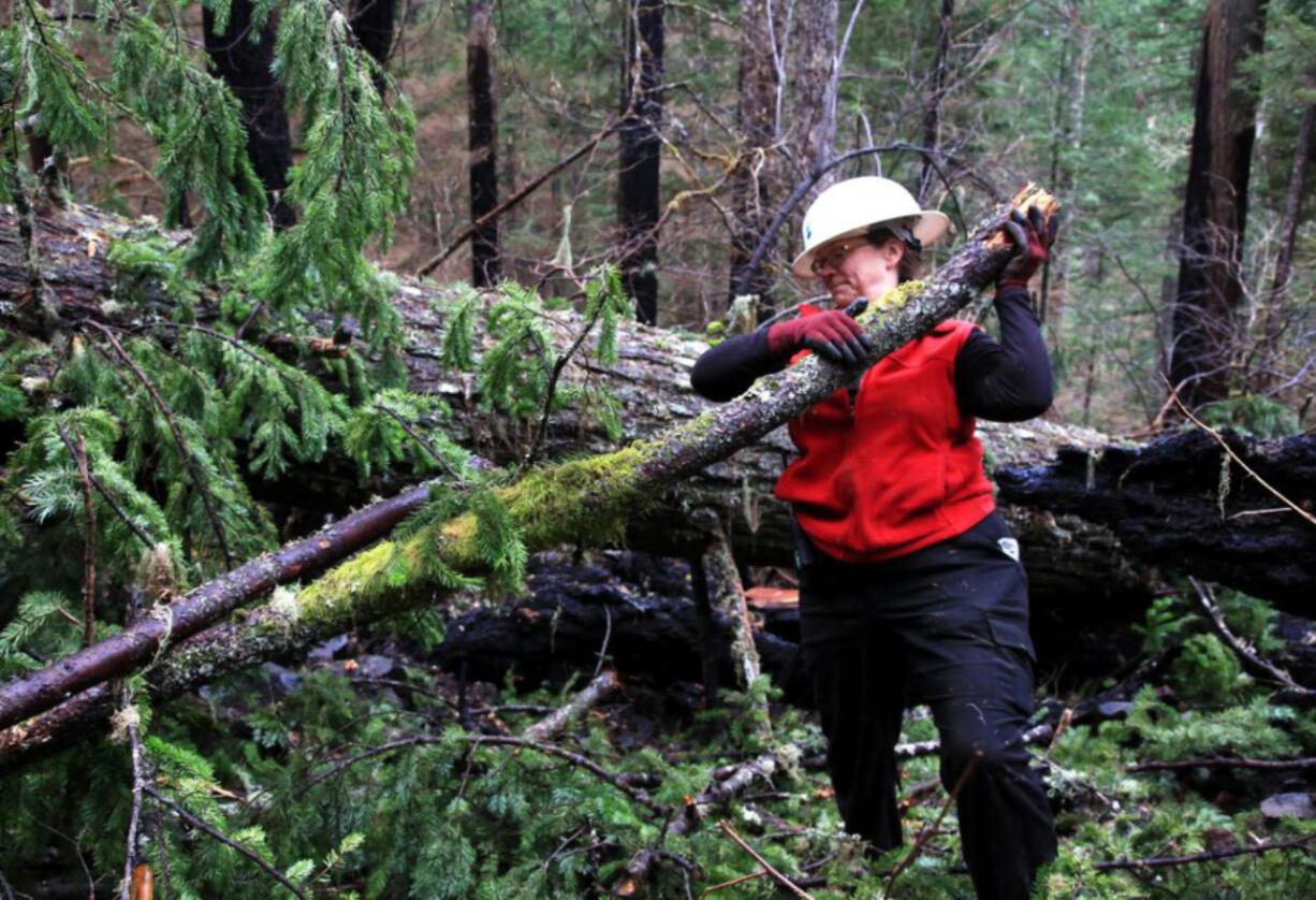 Trail crew volunteer Roberta Cobb clears a fallen limb on the Pacific Crest Trail as it winds through the burn area of the Eagle Creek fire in the Columbia River Gorge.
