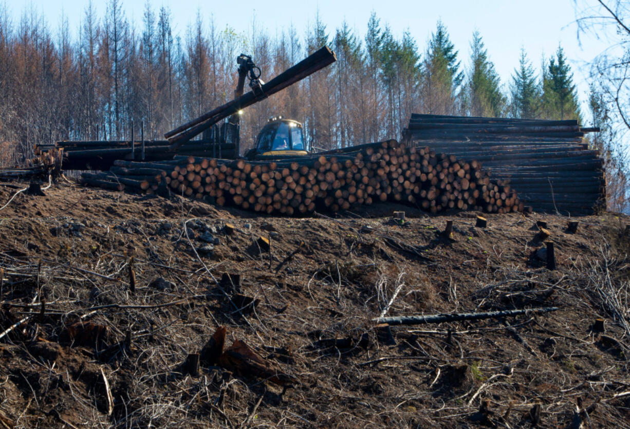 A loader piles logs above Finn Rock Landing on the McKenzie River as cleanup from the Holiday Farm Fire continues.