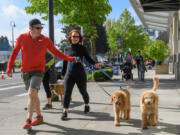 The 30th anniversary of the Humane Society for Southwest Washington's Walk/Run for the Animals is May 1.