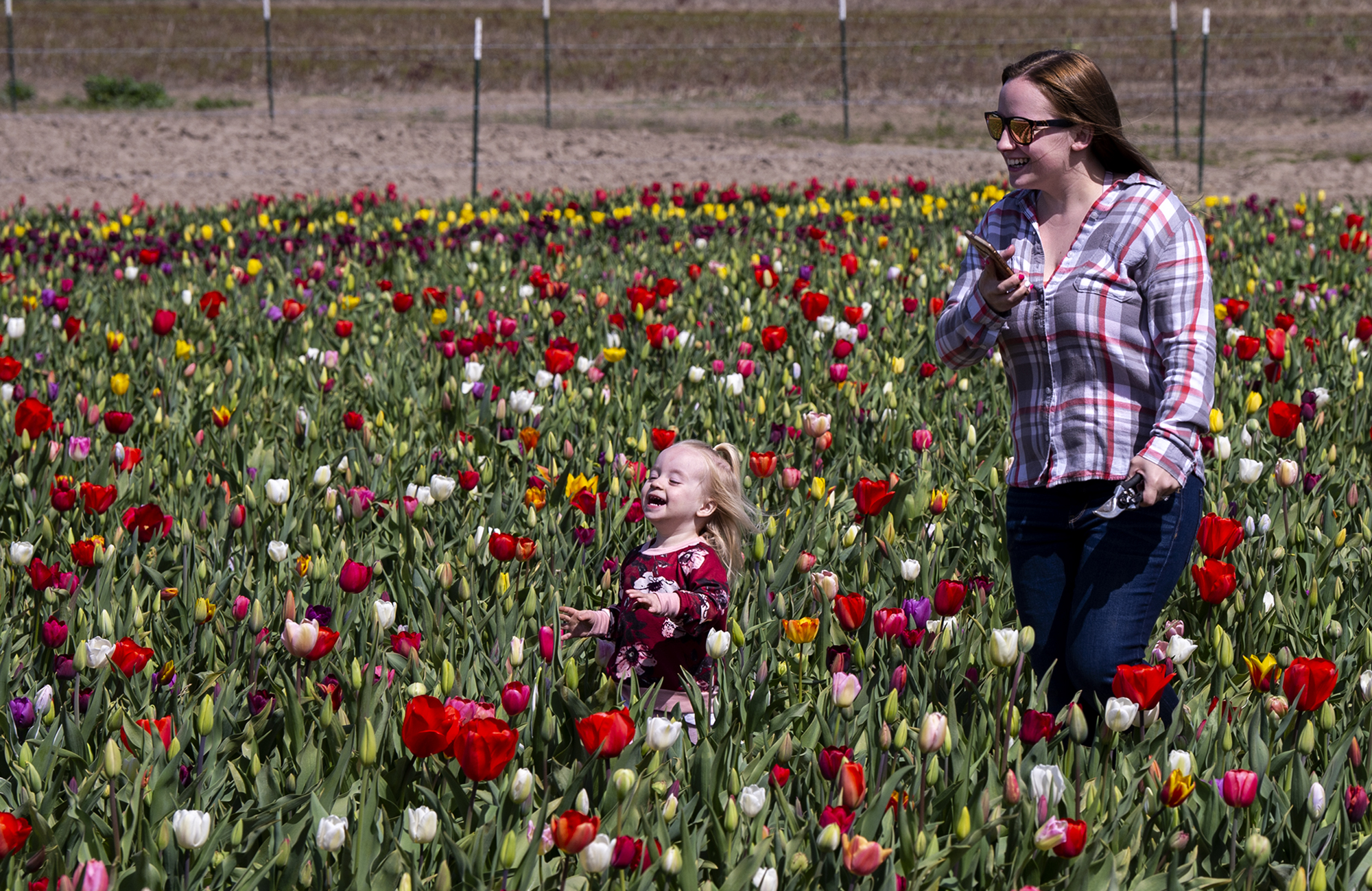 McKenzie Grauer, 2, runs through rows of tulips while her mother, Brandie Grauer follows her on Tuesday, April 6, 2021, at the Holland America Flower Gardens in Woodland. Dozens of people, including families, cyclists and Clark County residents roamed the grounds throughout the day. The Gardens include a show field, where tulips are observed and untouched, and a u-pick field where guests cut their own flowers for 50 cents each. The Gardens opened March 29 and run through Mother's Day on May 9.