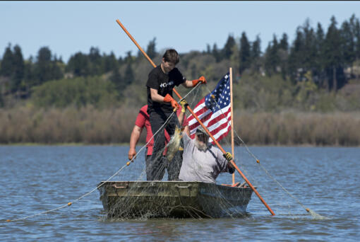 Conan Reutov, left, hauls a carp out of Vancouver Lake on Wednesday with the help of Arty Kuzmin. (Photos by Amanda Cowan/The Columbian)