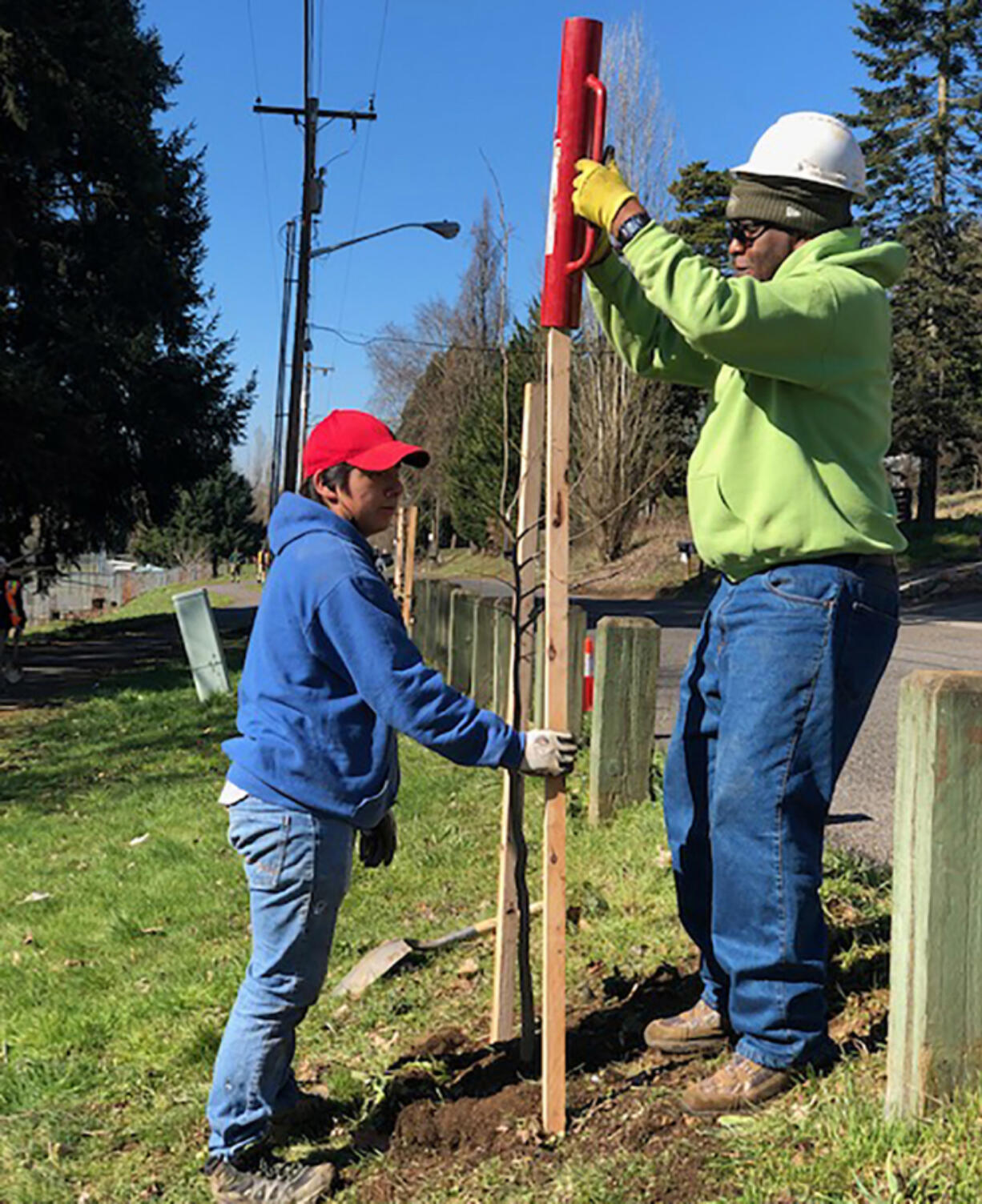 VANCOUVER: Volunteers help plant trees during a past Arbor Day celebration. The city is celebrating trees all month this year and encourages people to enjoy self-guided tree tours.