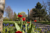 Battle Ground's Central Park, pictured Friday, includes a variety of plants and trees. The Lewis River Rotary Club, which adopted the park in November, is planning several projects to upgrade the green space.