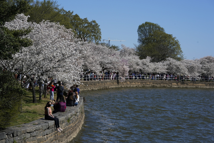 It S Cherry Blossom Season But Dc Isn T Ready To Open Up The Columbian