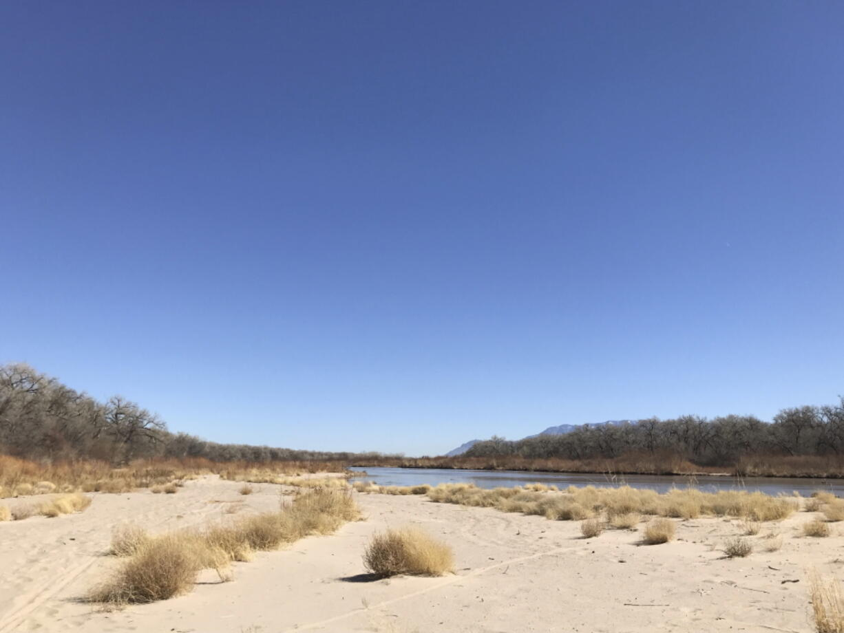 Tumbleweeds cover a sandbar along the Rio Grande on March 28 in Albuquerque, N.M. Like elsewhere in the Southwest, water managers in New Mexico are warning farmers that demand is expected to outpace supply this year.
