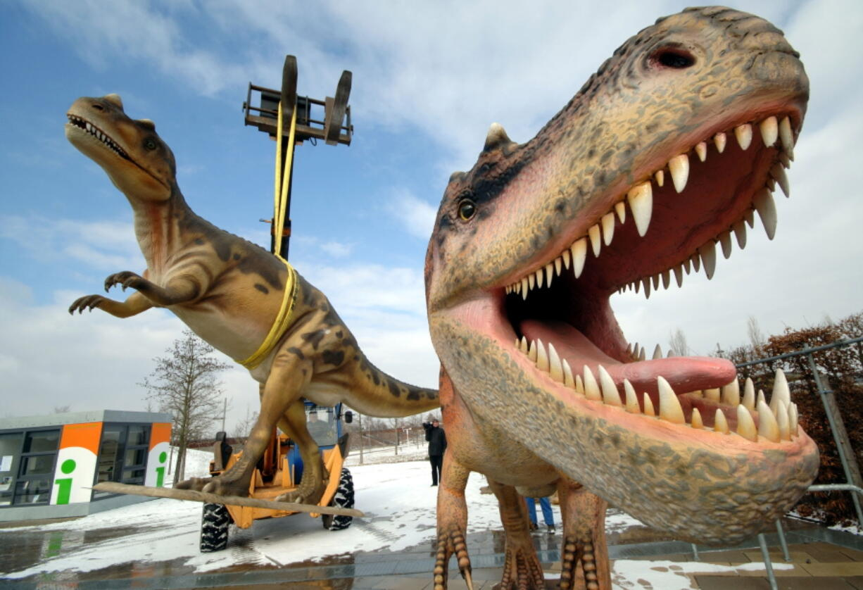 Life-sized Tyrannosaurus rex models are unloaded for a dinosaur exhibition in 2006 in Potsdam, Germany. A study released on Thursday calculates that 2.5 billion Tyrannosaurus rex prowled North America over a couple million years or so, with maybe 20,000 at any given time.