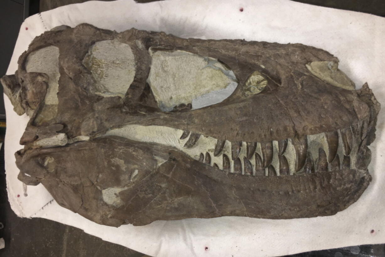 """A """"Hollywood"""" dinosaur specimen that was discovered approximately 2 miles north of the Rainbows and Unicorns Quarry on Grand Staircase-Escalante National Monument in Utah on Feb. 26, 2019."""